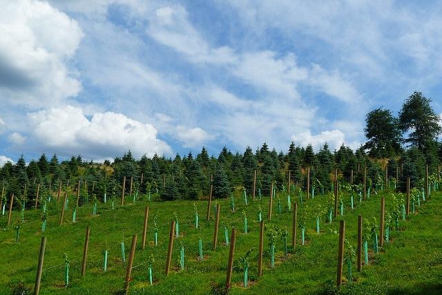wineries near mystic ct