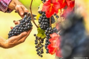 Have the best wines at the Saltwater Farm Vineyard