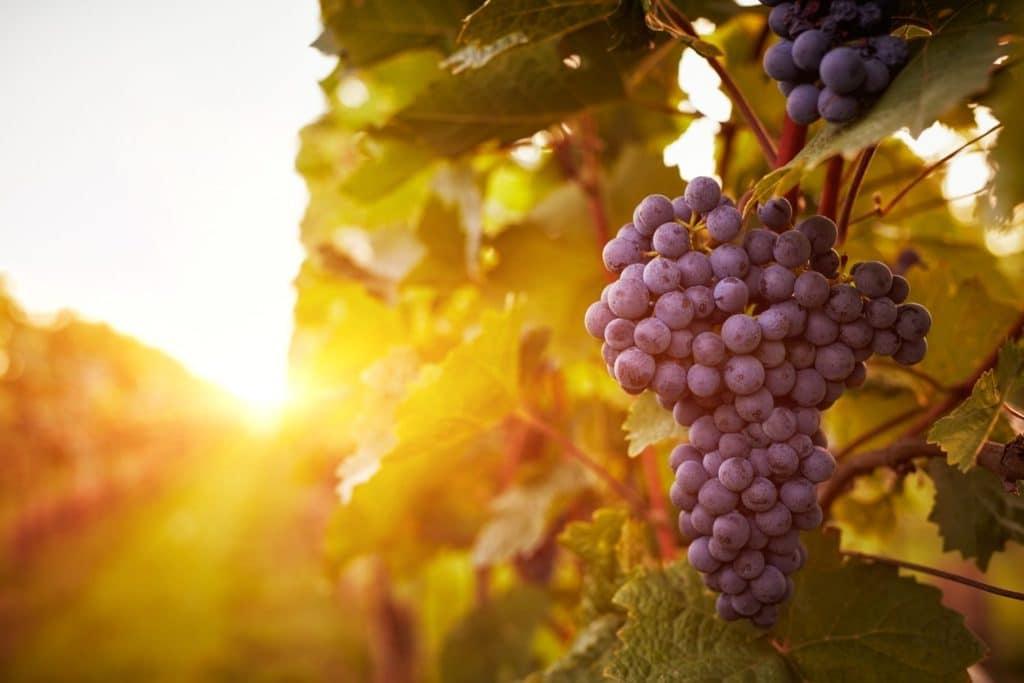 Connecticut Wine Trail