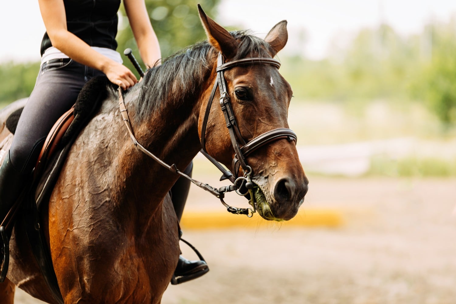 Picture of young pretty girl horseback riding in ct